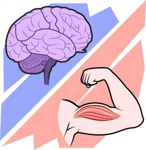 brains vs brawn